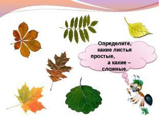 Определите, какие листья простые, а какие – сложные.