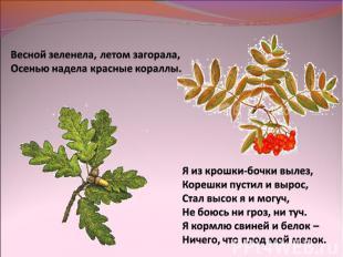 Весной зеленела, летом загорала,Осенью надела красные кораллы.Я из крошки-бочки