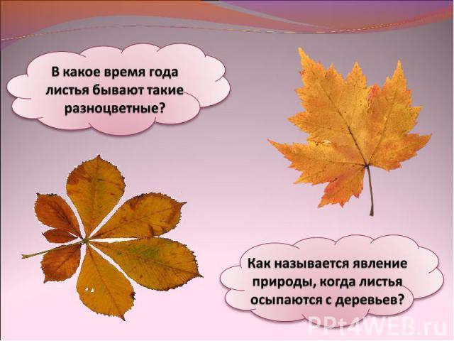 В какое время года листья бывают такие разноцветные?Как называется явление природы, когда листья осыпаются с деревьев?