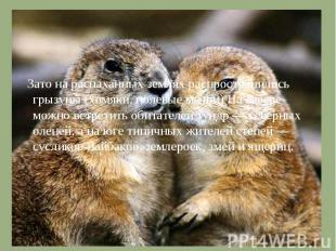 Зато на распаханных землях распространились грызуны (хомяки, полевые мыши) На се