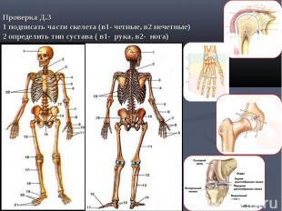 Проверка Д.З1 подписать части скелета (в1- четные, в2 нечетные) 2 определить тип