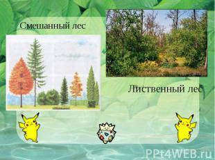 Смешанный лесЛиственный лес