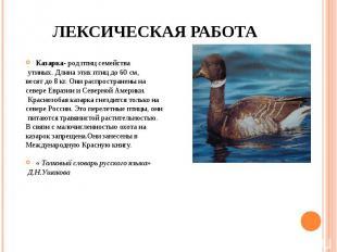 ЛЕКСИЧЕСКАЯ РАБОТА Казарка- род птиц семейства утиных. Длина этих птиц до 60 см,