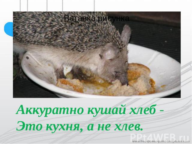 Аккуратно кушай хлеб -Это кухня, а не хлев.