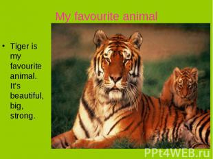 My favourite animalTiger is my favourite animal. It's beautiful, big, strong.