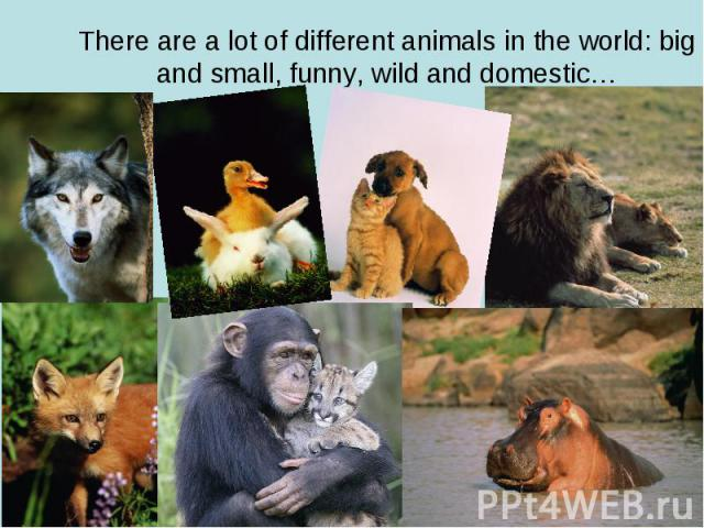 There are a lot of different animals in the world: big and small, funny, wild and domestic…