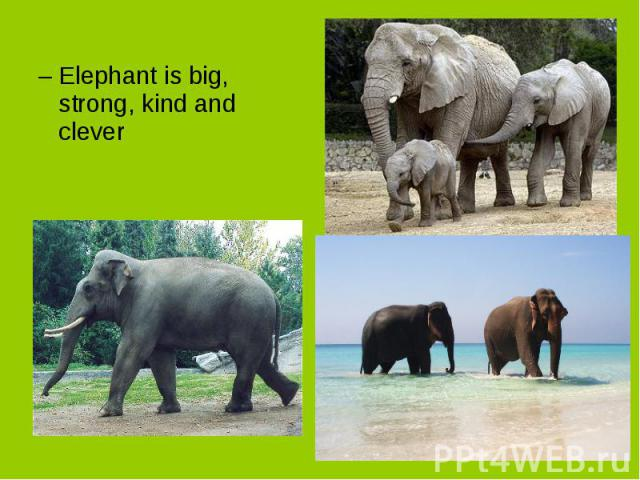 Elephant is big, strong, kind and clever