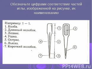 Обозначьте цифрами соответствие частей иглы, изображенной на рисунке, их наимено