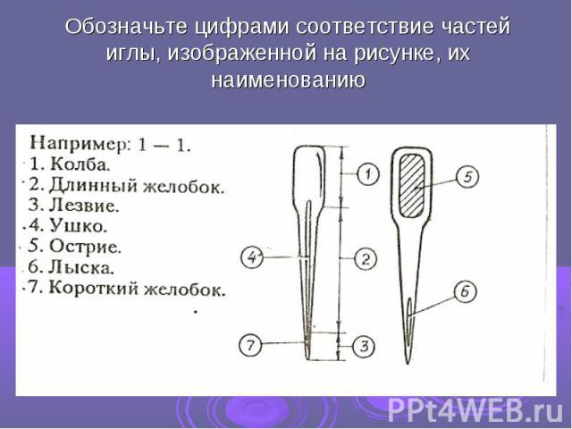 Обозначьте цифрами соответствие частей иглы, изображенной на рисунке, их наименованию