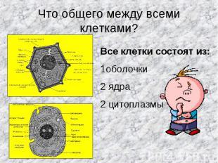 Что общего между всеми клетками? Все клетки состоят из:1оболочки2 ядра2 цитоплаз