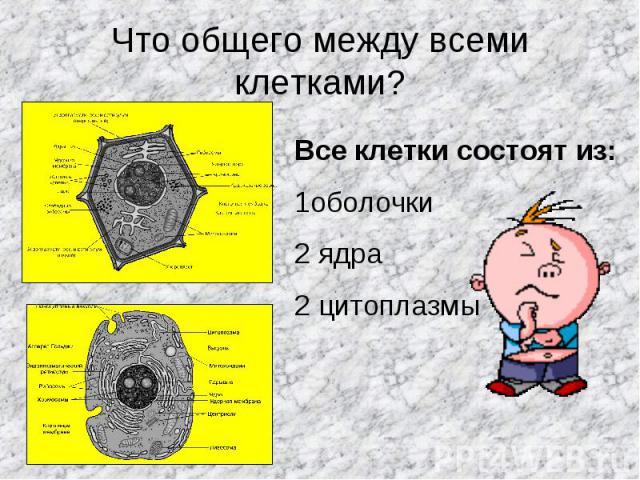 Что общего между всеми клетками? Все клетки состоят из:1оболочки2 ядра2 цитоплазмы