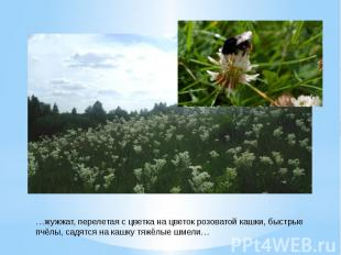 …жужжат, перелетая с цветка на цветок розоватой кашки, быстрыепчёлы, садятся на
