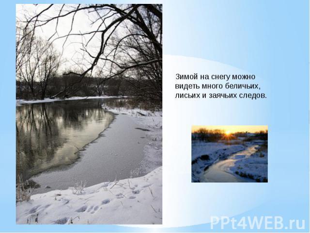 Зимой на снегу можно видеть много беличьих,лисьих и заячьих следов.