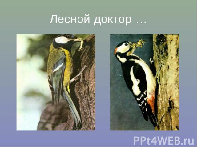 Лесной доктор …