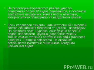 На территории Бураевского района удалось обнаружить более 20 видов лишайников, в