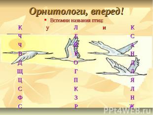 Орнитологи, вперед!Вспомни названия птиц:
