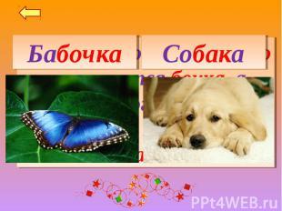 БабочкаСобакаВнутри какого насекомого помещается бочка, а внутри какого домашнег