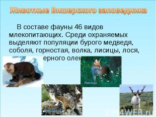 Животные Вишерского заповедникаВ составе фауны 46 видов млекопитающих. Среди охр