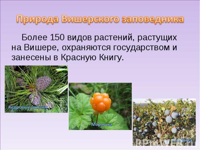 Природа Вишерского заповедникаБолее 150 видов растений, растущих на Вишере, охраняются государством и занесены в Красную Книгу.