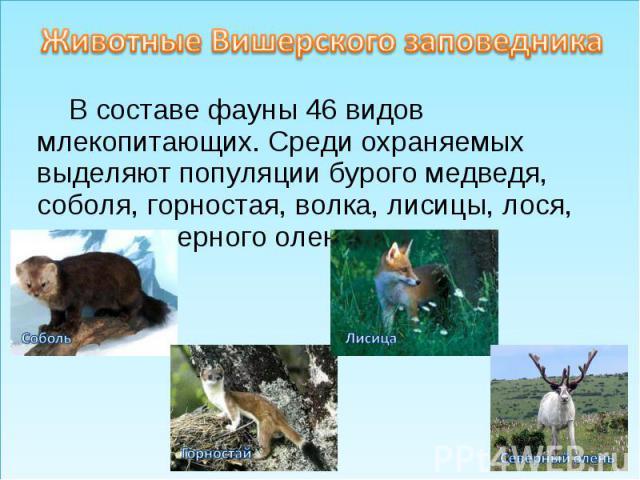 Животные Вишерского заповедникаВ составе фауны 46 видов млекопитающих. Среди охраняемых выделяют популяции бурого медведя, соболя, горностая, волка, лисицы, лося, дикого северного оленя.