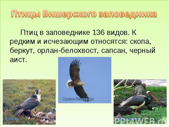 Птицы Вишерского заповедника Птиц в заповеднике 136 видов. К редким и исчезающим относятся: скопа, беркут, орлан-белохвост, сапсан, черный аист.