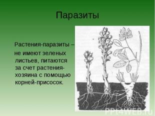 Паразиты Растения-паразиты – не имеют зеленых листьев, питаются за счет растения