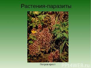 Растения-паразитыПетров крест