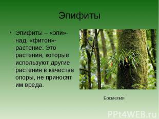 ЭпифитыЭпифиты – «эпи»-над, «фитон»- растение. Это растения, которые используют