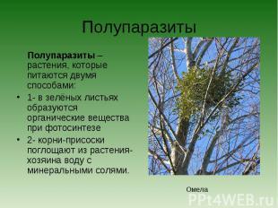 Полупаразиты Полупаразиты – растения, которые питаются двумя способами:1- в зелё