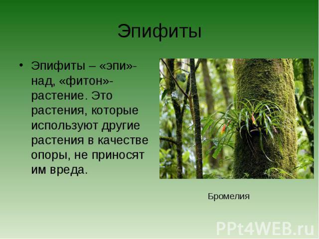 ЭпифитыЭпифиты – «эпи»-над, «фитон»- растение. Это растения, которые используют другие растения в качестве опоры, не приносят им вреда.