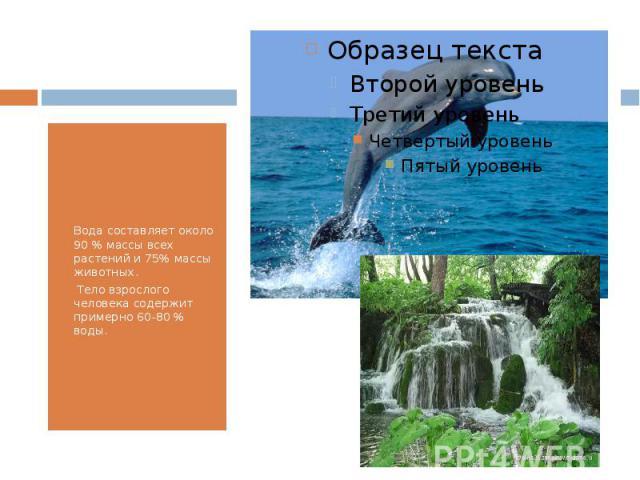 Вода составляет около 90 % массы всех растений и 75% массы животных. Тело взрослого человека содержит примерно 60-80 % воды.