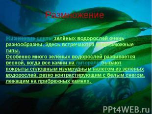 РазмножениеЖизненные циклы зелёных водорослей очень разнообразны. Здесь встречаю