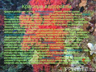 Красные водорослиКрасные водоросли имеют эукариотические клетки. Клетки имеют пл