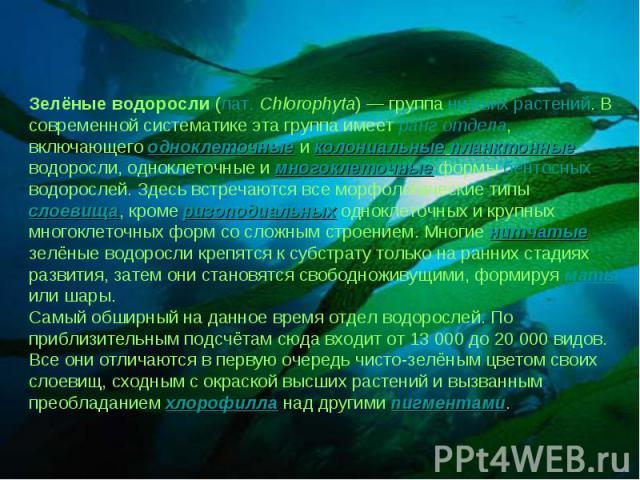 Зелёные водоросли (лат.Chlorophyta) — группа низших растений. В современной систематике эта группа имеет ранг отдела, включающего одноклеточные и колониальные планктонные водоросли, одноклеточные и многоклеточные формы бентосных водорослей. Здесь в…