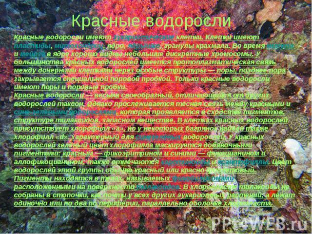Красные водорослиКрасные водоросли имеют эукариотические клетки. Клетки имеют пластиды, митохондрии, ядро, ядрышко, гранулы крахмала. Во время митоза и мейоза в ядре хорошо видны небольшие дискретные хромосомы. У большинства красных водорослей имеет…
