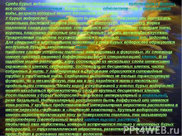 Среди бурых водорослей отсутствуют одноклеточные и колониальные формы, все особи многоклеточные. Встречаются как однолетние, так и многолетние виды, возраст которых может достигать 15-18 лет.У бурых водорослей талломы могут быть микроскопическими ил…