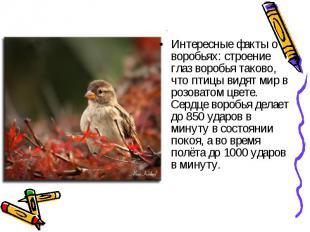 Интересные факты о воробьях: строение глаз воробья таково, что птицы видят мир в