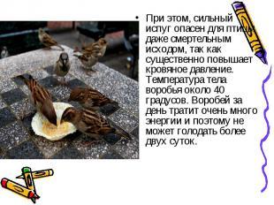 При этом, сильный испуг опасен для птицы даже смертельным исходом, так как сущес