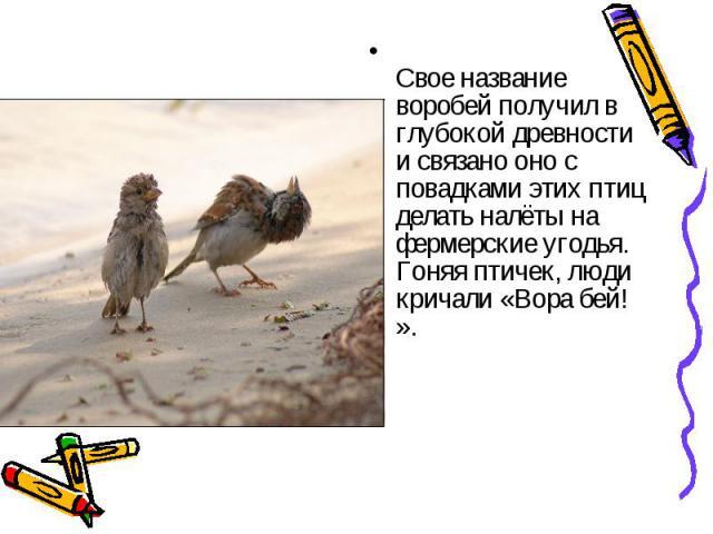 Свое название воробей получил в глубокой древности и связано оно с повадками этих птиц делать налёты на фермерские угодья. Гоняя птичек, люди кричали «Вора бей! ».
