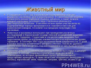 Животный мирВ созданном в 1972 году Воронежском водохранилище обитают множество