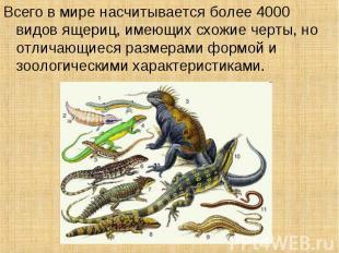 Всего в мире насчитывается более 4000 видов ящериц, имеющих схожие черты, но отл