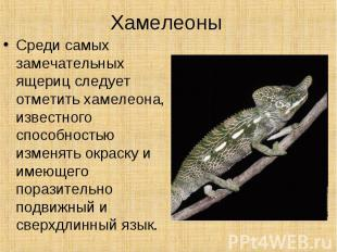 ХамелеоныСреди самых замечательных ящериц следует отметить хамелеона, известного