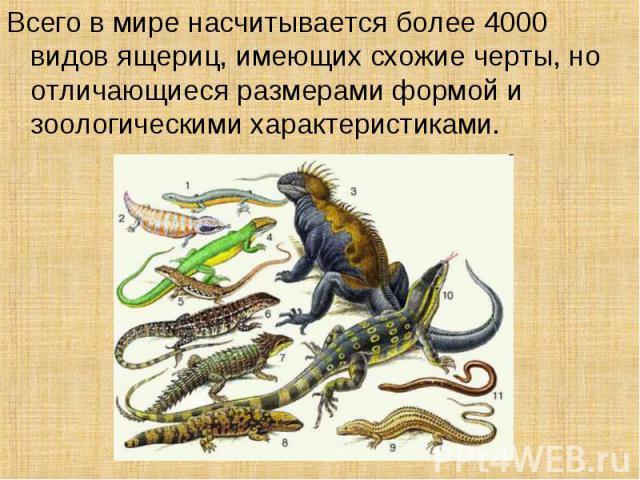 Всего в мире насчитывается более 4000 видов ящериц, имеющих схожие черты, но отличающиеся размерами формой и зоологическими характеристиками.