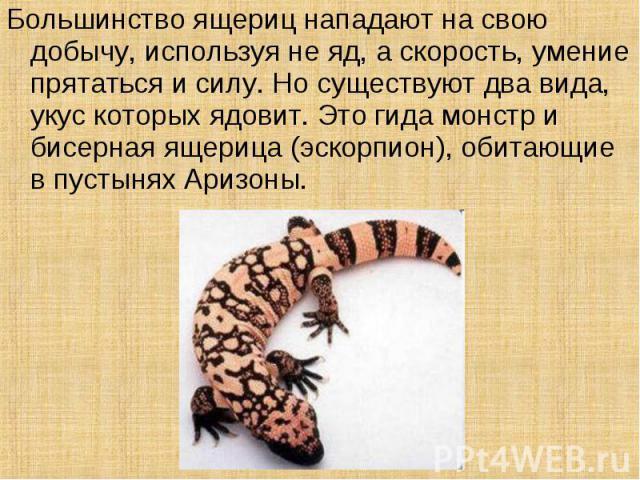 Большинство ящериц нападают на свою добычу, используя не яд, а скорость, умение прятаться и силу. Но существуют два вида, укус которых ядовит. Это гида монстр и бисерная ящерица (эскорпион), обитающие в пустынях Аризоны.