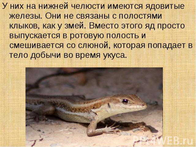 У них на нижней челюсти имеются ядовитые железы. Они не связаны с полостями клыков, как у змей. Вместо этого яд просто выпускается в ротовую полость и смешивается со слюной, которая попадает в тело добычи во время укуса.