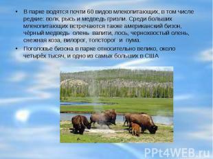 В парке водятся почти 60 видов млекопитающих, в том числе редкие: волк, рысь и м