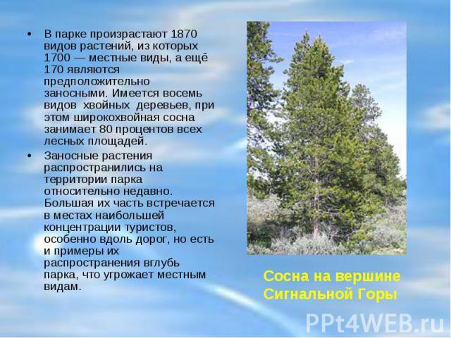 В парке произрастают 1870 видов растений, из которых 1700— местные виды, а ещё 170 являются предположительно заносными. Имеется восемь видов хвойных деревьев, при этом широкохвойная сосна занимает 80 процентов всех лесных площадей. Заносные растени…