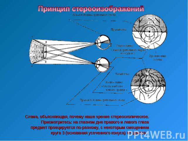 Принцип стереоизображенийСхема, объясняющая, почему наше зрение стереоскопическое.Присмотритесь: на глазном дне правого и левого глаза предмет проецируется по-разному, с некоторым смещением круга 3 (основания усеченного конуса) от центра 1