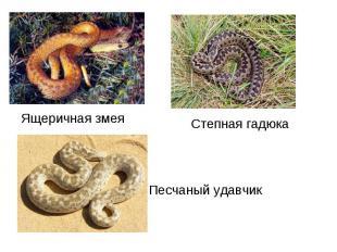 Ящеричная змеяСтепная гадюка Песчаный удавчик