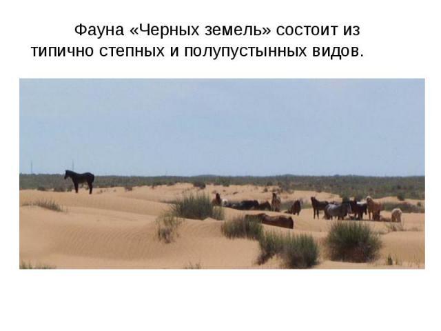 Фауна «Черных земель» состоит из типично степных и полупустынных видов.